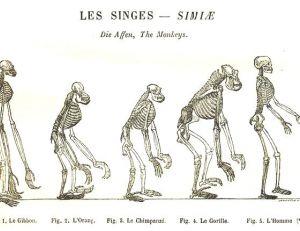 Évolution des hominidés, illustration parue dans « l'homme et les animaux », A.E Brehm