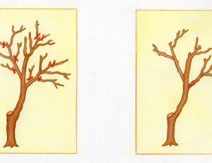 Précautions à prendre pour la taille des arbres