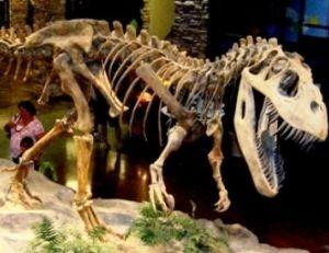Torvosaure