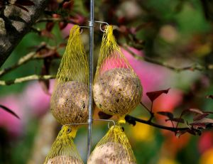 Planifier l'aménagement du jardin © Nature & Découvertes