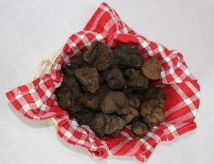 Tout sur les truffes