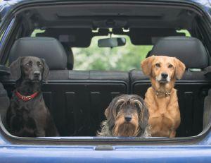 Partir en vacances avec des animaux domestiques