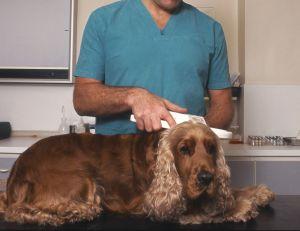 Devenir vétérinaire