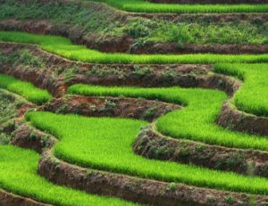 Paysage du Vietnam