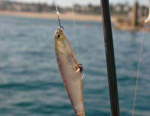 Le Water Monitor ressemble à un petit poisson