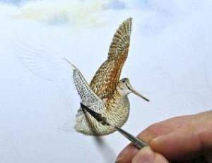 Le peintre anglais Colin Woolf, peint une bécasse à l'aide d'un pinceau fait avec une « plume du peintre », www.wildart.co.uk