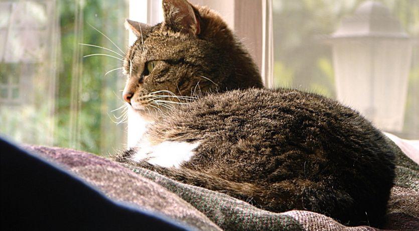 Vivre avec un chat en appartement - A quel age couper les griffes d un chaton ...