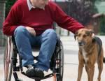 Allocation aux adultes handicapés (AAH) : tout savoir