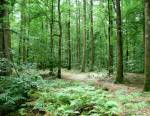 Devenir garde forestier