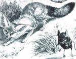 Les fennecs sont les prédateurs des gerboises