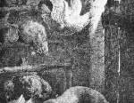 Un carnage de fouine dans un poulailler
