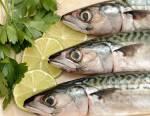 Pêche au maquereau