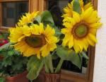 Bouquet de fleurs de tournesol