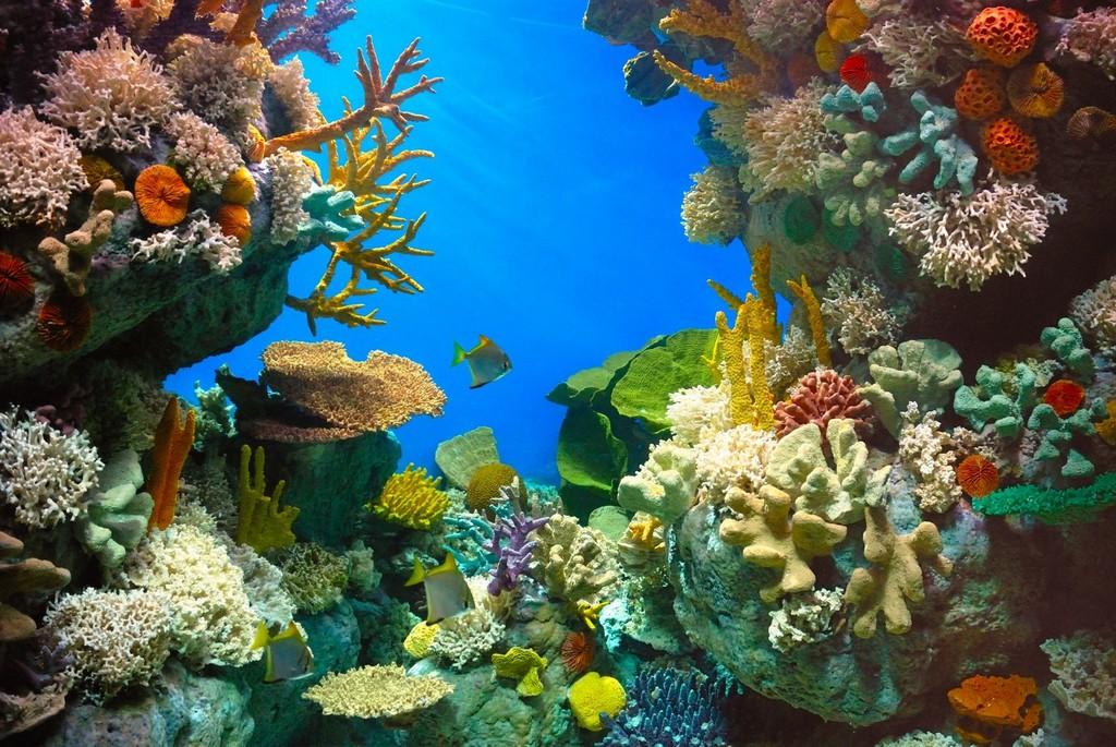 Aquarium de r ve pour ses poissons for Poisson tropicaux pour aquarium
