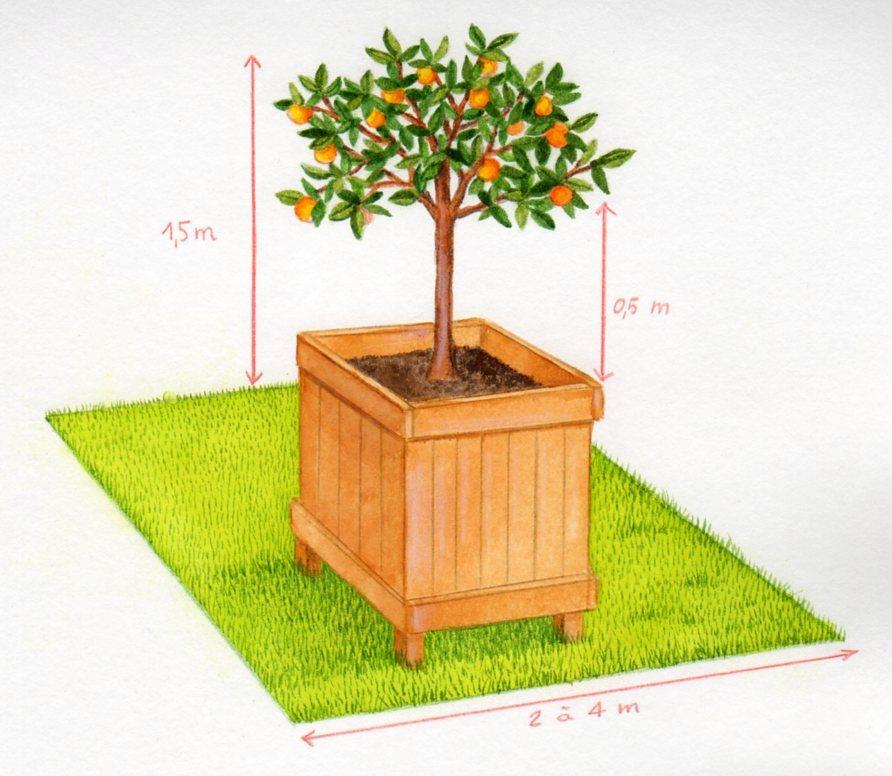 Arbres fruitiers pour petits jardins for Arbres pour jardin