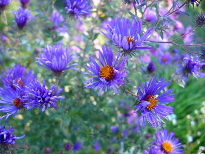 Bien-aimé Fleurs automne : connaitre les différentes fleurs d'automne (rose  OJ18