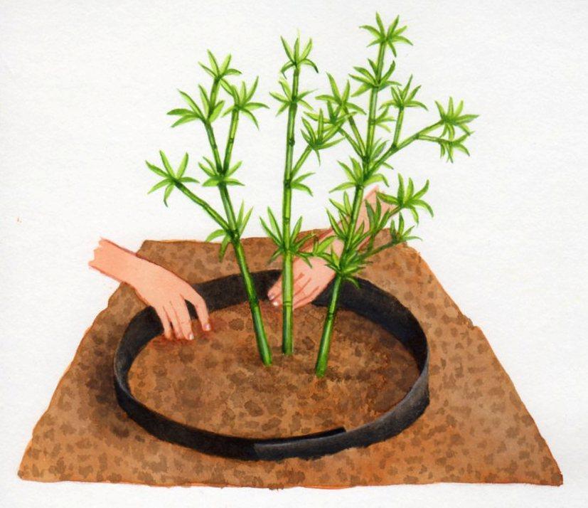 Cultiver le bambou - Comment traiter le bambou ...