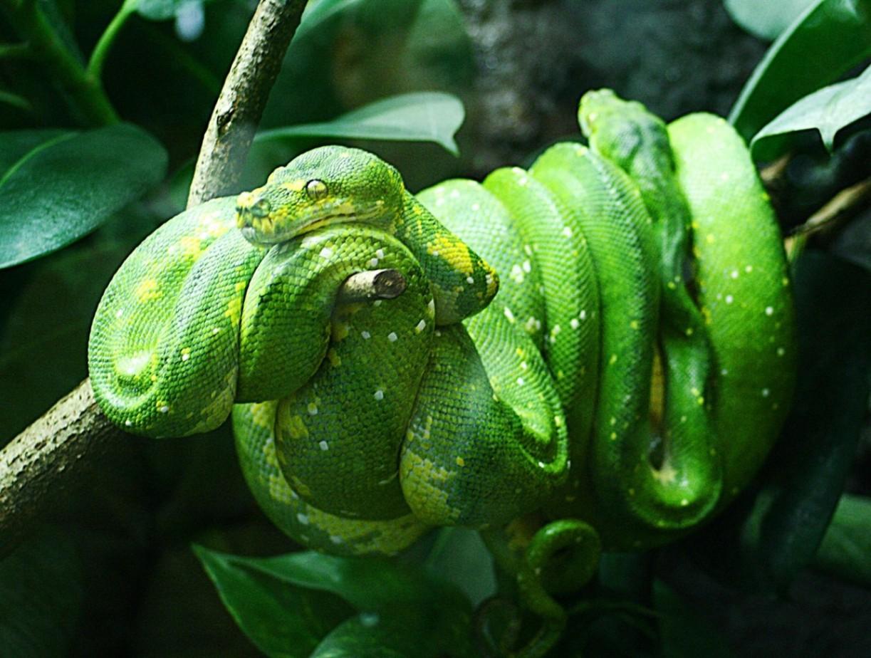 Inland Reptile