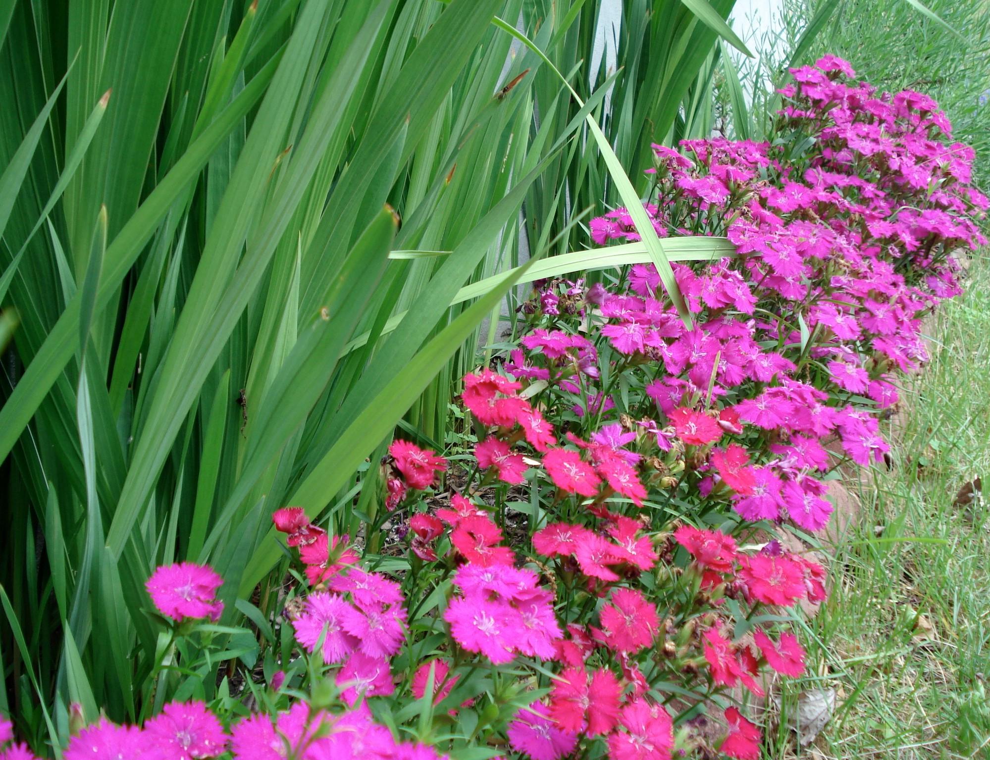 Plantes bordures dall es 20170620055547 for Plantes decoratives exterieur