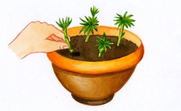 bouturer une plante tout savoir sur la bouture d 39 une plante. Black Bedroom Furniture Sets. Home Design Ideas