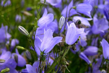 Plantes vivaces conseils de plantation et d 39 entretien for Entretien plantes vivaces
