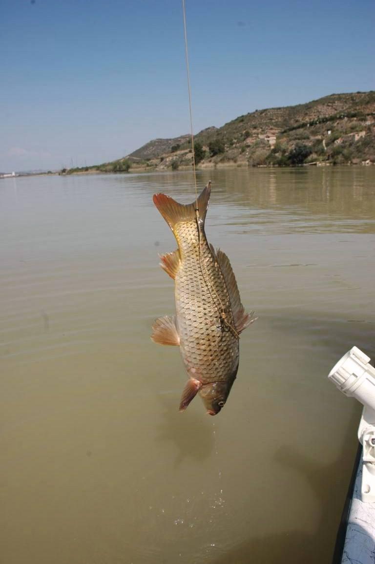 La chasse et la pêche le magasin saratov le catalogue des marchandises