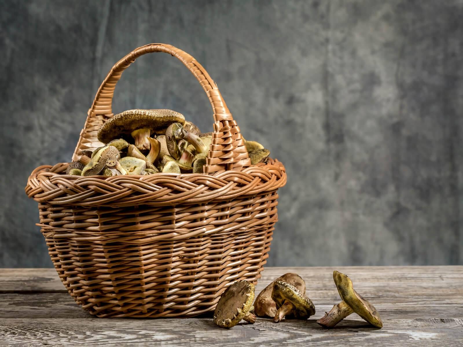 Champignons des applis pour une cueillette high tech - Application pour reconnaitre les champignons ...