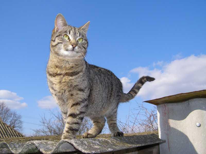 Adopter un chat de goutti re for Adaptation chat nouvelle maison