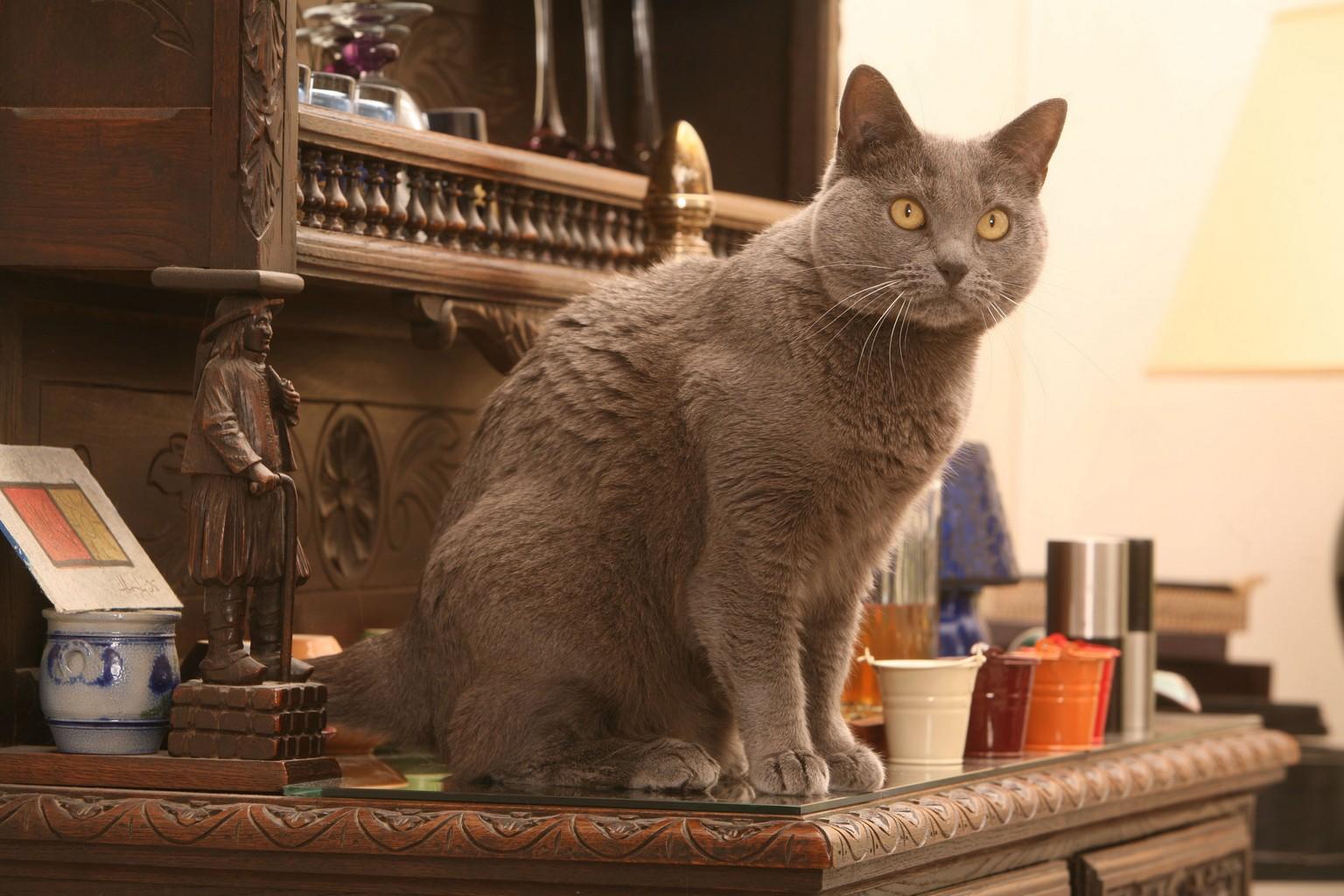 Combien de temps peut on laisser un chat seul chez soi - Combien de temps construction maison ...
