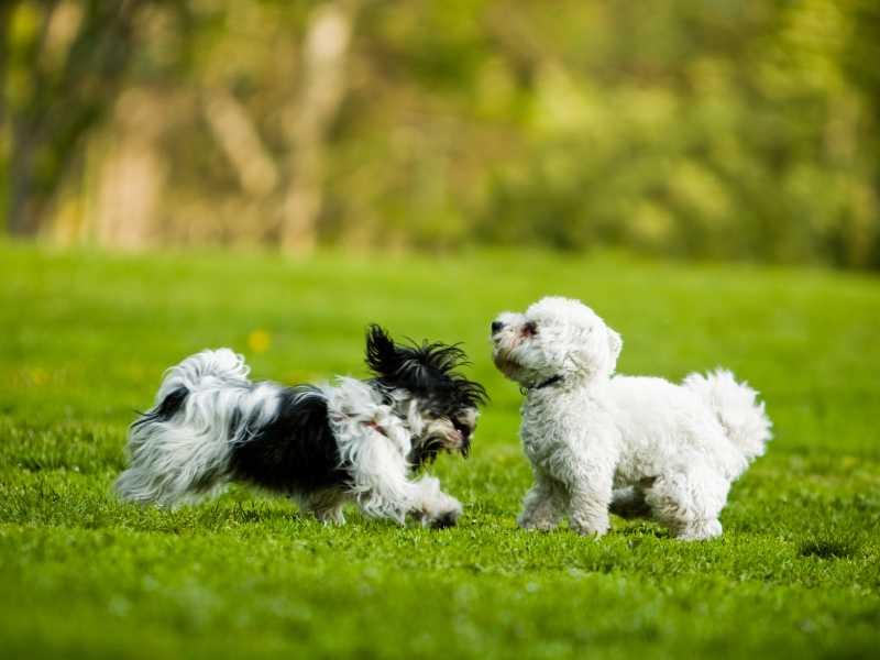 Choisir un chien de petite taille - Lave linge de petite taille ...
