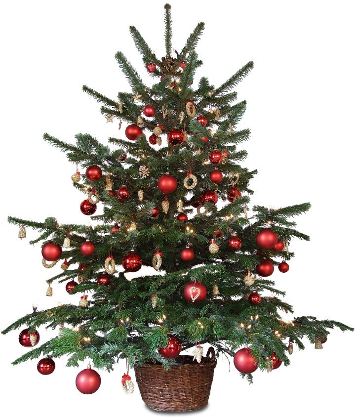 Sapin de Noël  choisir un sapin de Noël  Pratiquefr