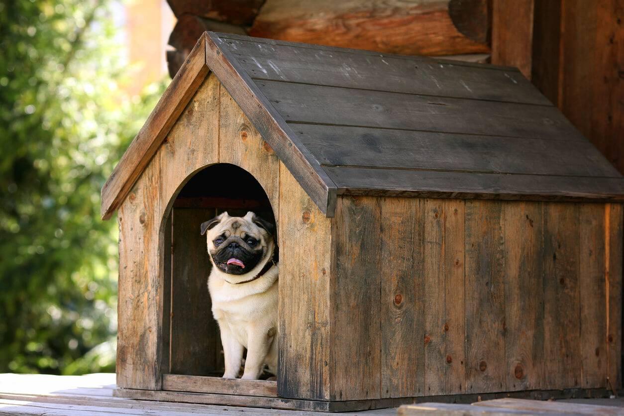 construire une niche pour son chien les criteres importants. Black Bedroom Furniture Sets. Home Design Ideas