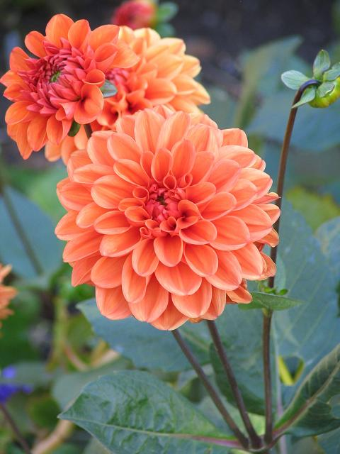 Fleurs automne : connaitre les différentes fleurs dautomne (rose ...