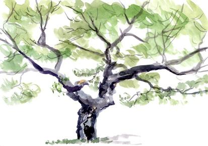Dessiner un arbre - Dessiner un arbre ...