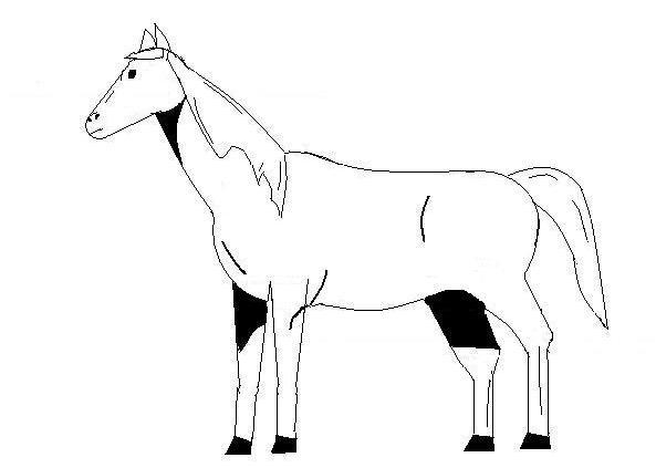 Dessiner un cheval - Comment dessiner un cheval au galop ...