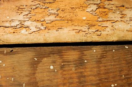 diagnostic termites. Black Bedroom Furniture Sets. Home Design Ideas