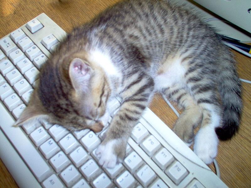 comment viter de s 39 endormir sur son clavier au bureau. Black Bedroom Furniture Sets. Home Design Ideas