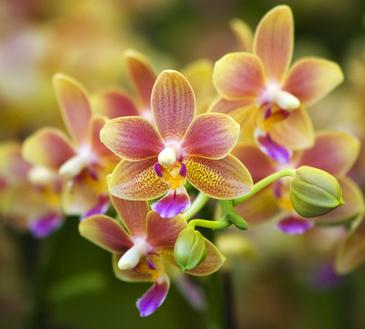 D corer avec de jolies fleurs - Decoration avec des fleurs ...