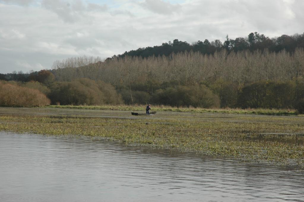 Rep rer un tang poisson for Achat poisson etang