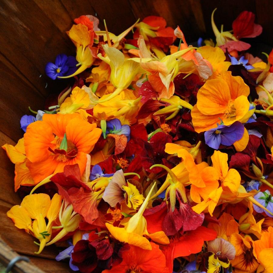 Fleurs comestibles - Pensee fleur vivace ou annuelle ...