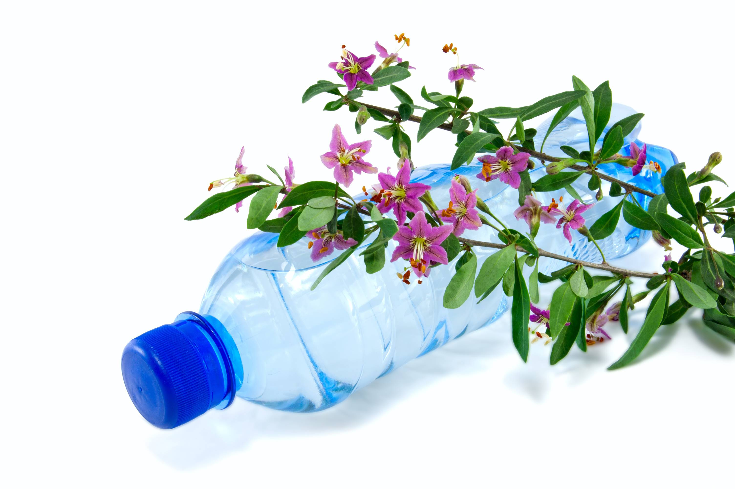 Fabriquer des pots de fleurs rigolos avec des bouteilles en plastique - Fleur bouteille plastique ...