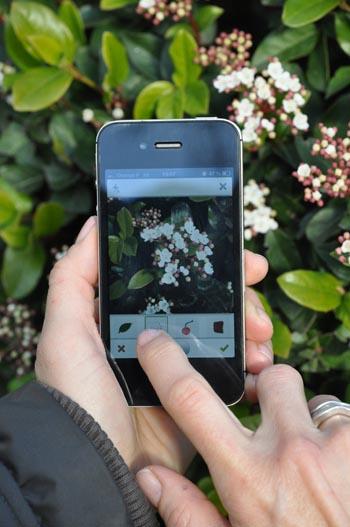 plantnet l 39 appli pour tout savoir imm diatement sur la flore. Black Bedroom Furniture Sets. Home Design Ideas