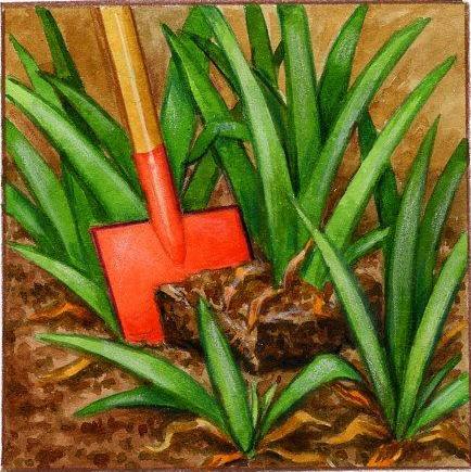 iris comment planter et cultiver des iris. Black Bedroom Furniture Sets. Home Design Ideas