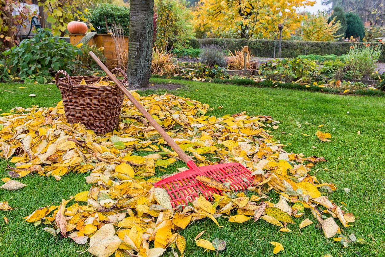 Jardin conseils et astuces pour entrer dans l 39 automne for Jardi conseil