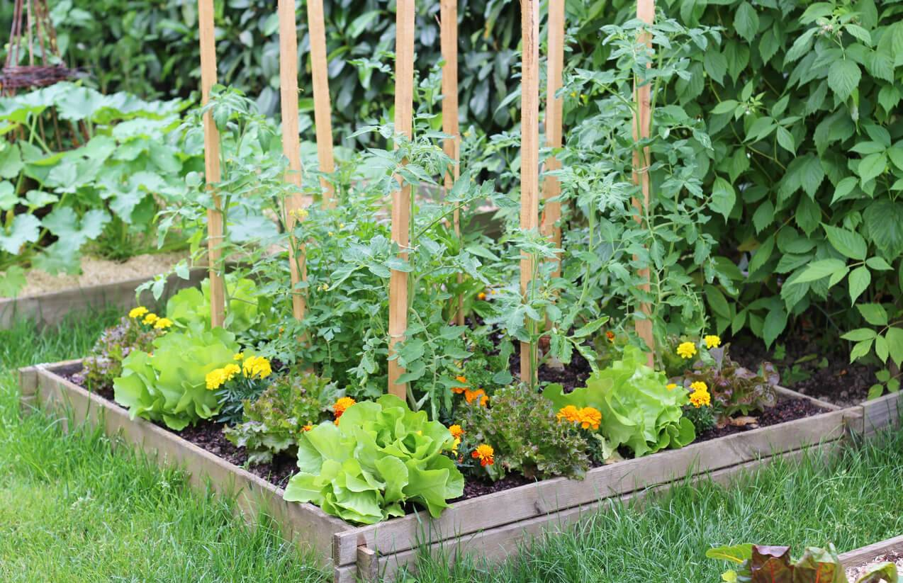 jardin optimisez votre potager en plantant des fleurs. Black Bedroom Furniture Sets. Home Design Ideas
