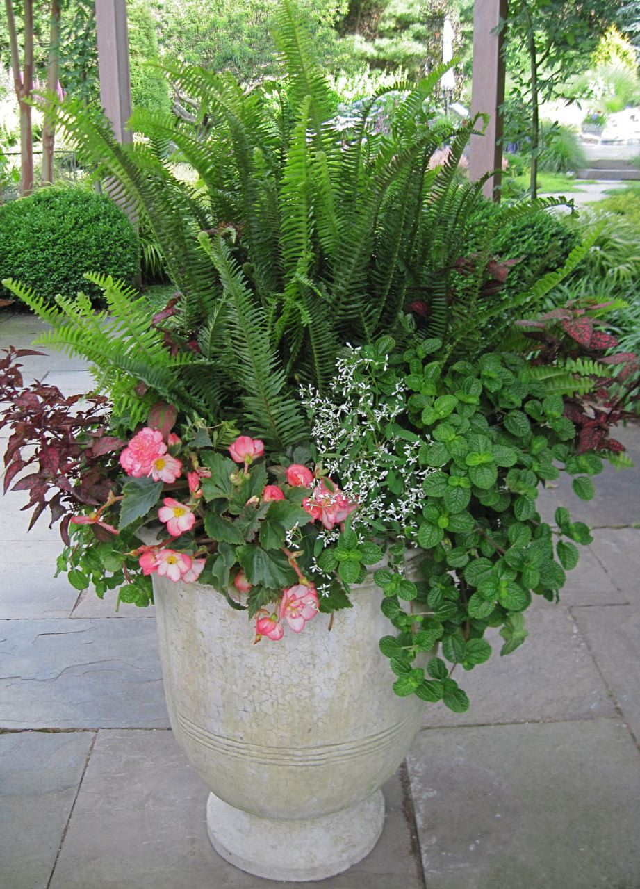 Plante en pot cr er un jardin avec des plantes en pot for Comment planter un palmier en pot