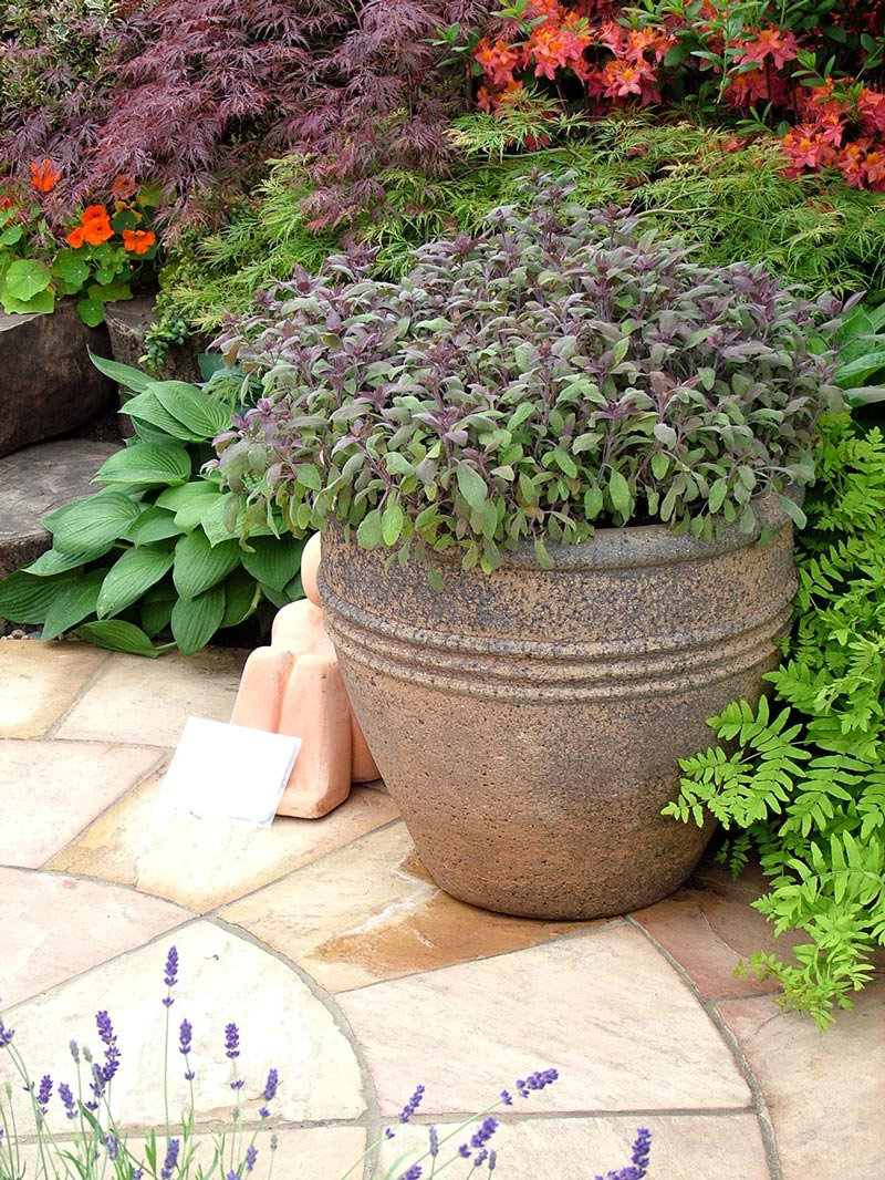 Plante en pot cr er un jardin avec des plantes en pot - Pot en fonte pour jardin ...