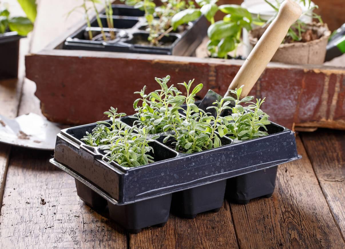 jardin qu 39 est ce que l 39 hydroponie ou culture sans terre. Black Bedroom Furniture Sets. Home Design Ideas