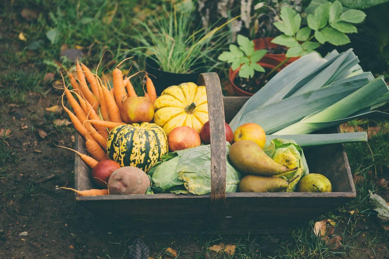 Quoi Mettre Au Potager En Septembre jardin : que planter en septembre ? | pratique.fr