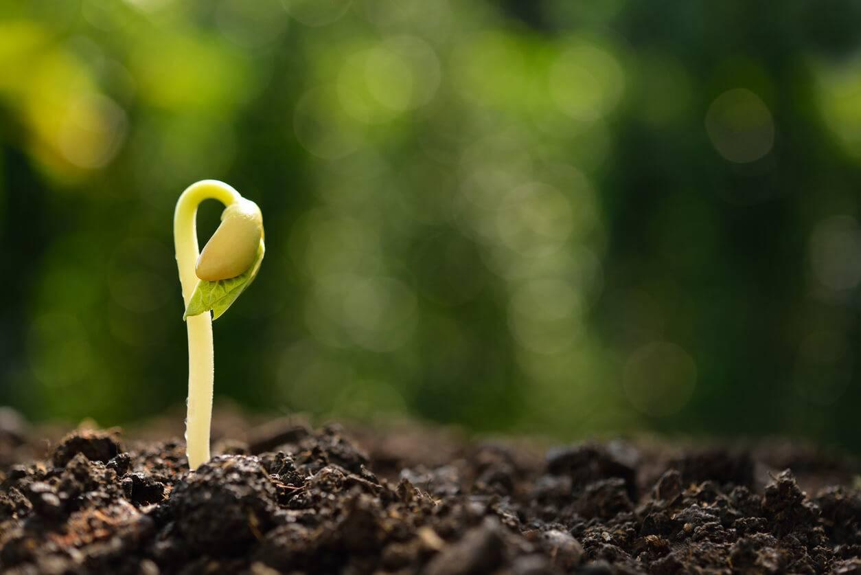 jardin troquez vos graines et plantes sur internet